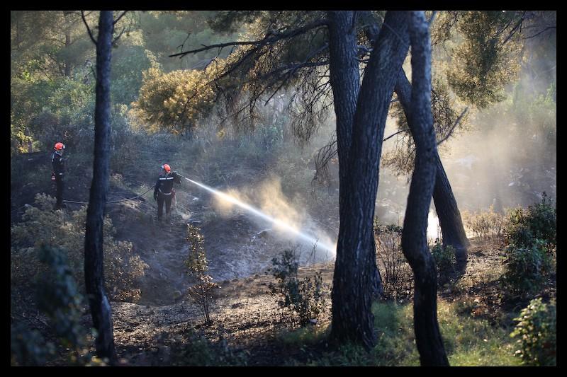 Feu de végétation - savine - marseille - M. Baudis BMPM