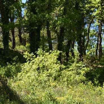 Casser la continuité au sol de la végétation