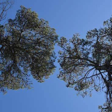 Séparer les houppiers des arbres dominants